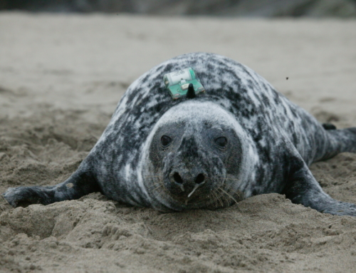 New maps show where our seals are when at sea