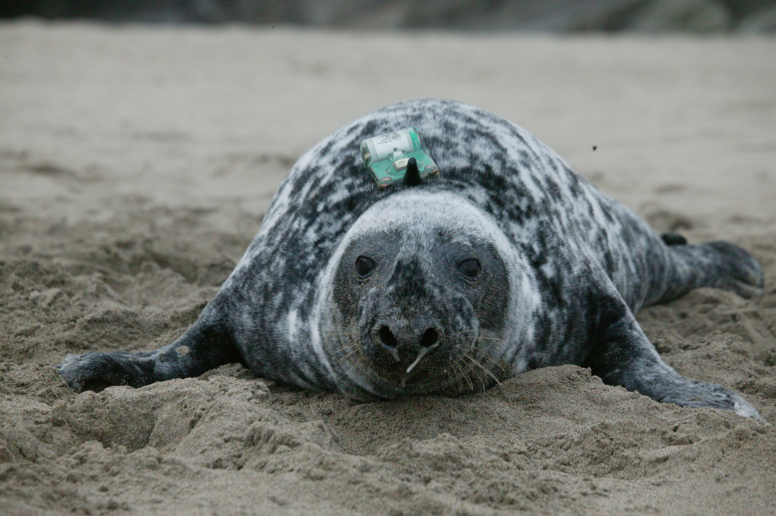 Tagged Seal